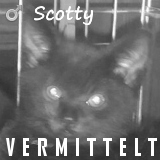 161130 Scotty thumb 160 vermittelt